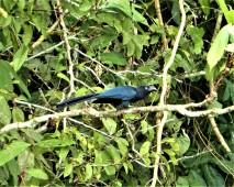 Ani Bird