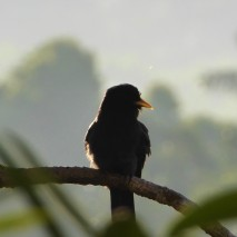 Bird in Canopy Tower