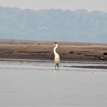 Napo River Birding