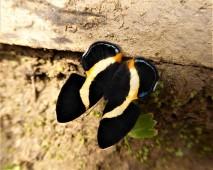 October - Migration of Butterflies 13
