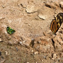 October - Migration of Butterflies 3