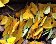 October - Migration of Butterflies 6