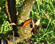 October - Migration of Butterflies 7