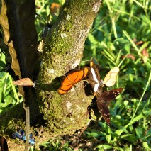 October - Migration of Butterflies 7