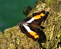 October - Migration of Butterflies 8