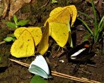 October Month of Butterflies 3