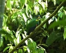 Orange Cheek Parrot 4