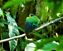 Orange Cheek Parrot 5