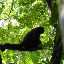 Woolly Monkey Sillhouette
