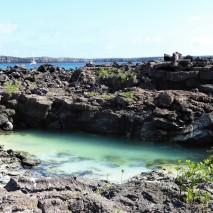 genovesa island
