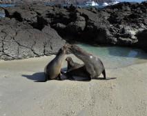 sea lion familiy