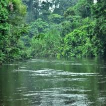 Cocaya River