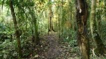 Dense Jungle 2