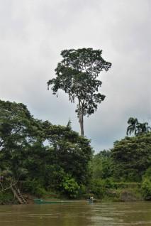 Oropendola Nest 2