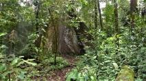 Primary Rainforest