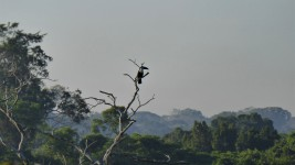 Toucan in the Canopy